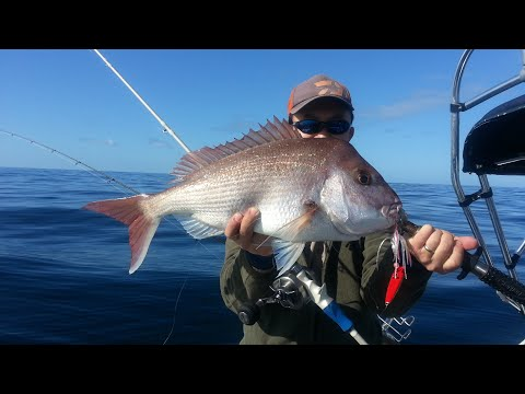 Inchiku Jigging for Snapper with Gomoku rods and pirate jigs - Sydney Australia