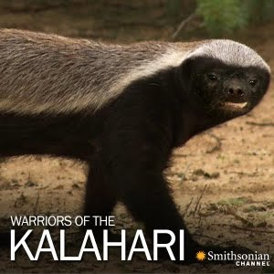 Warriors of the Kalahari