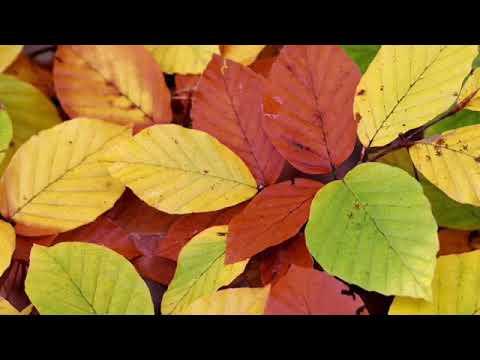 Kolorowe listki 1