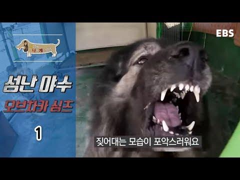 세상에 나쁜 개는 없다 - 성난 야수 오브차카 싱츠_#001