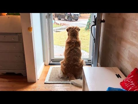 Dog Starts Acting Oddly So Family Looks Outside – Then They Call 911