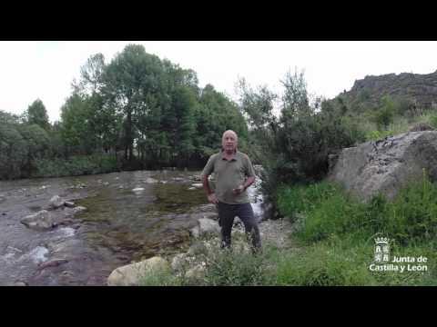 Coto de Pesca - Palencia