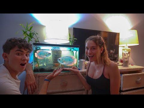 Surprising My Girlfriend With BEAUTIFUL FISH!