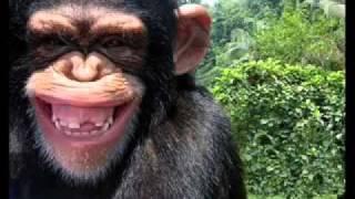 những pha hài hước của khỉ