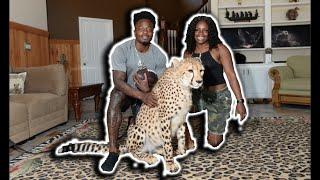 GoodwinSZN Travel: Meet Tut The Cheetah