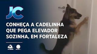 Conheça a cadelinha que pega elevador sozinha, em Fortaleza