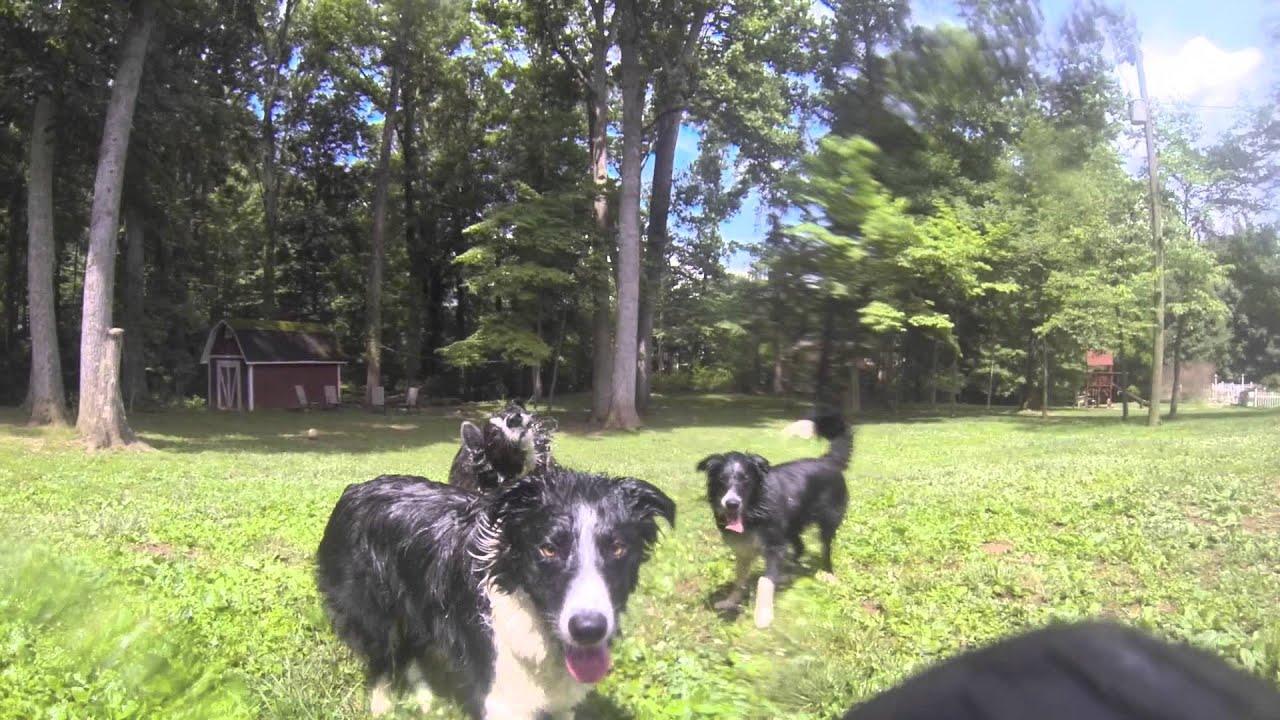 3 chiens et un tuyau d'arrosage