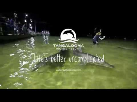 video Tangalooma Dolphin Feeding Day Trip from Brisbane