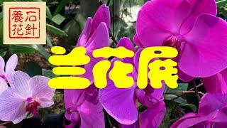 多伦多兰花展 Soos Orchids Show 2019 - 幻灯播放1