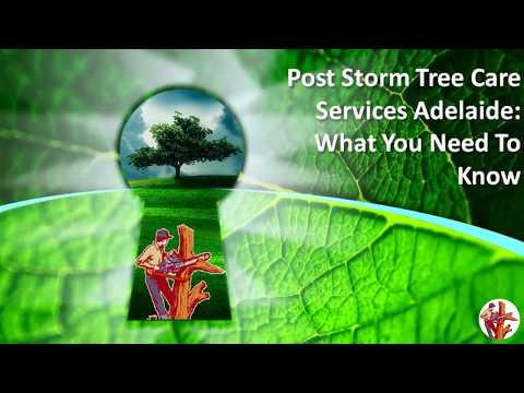 Post Storm Tree Care Services Adelaide: What You Need To Know