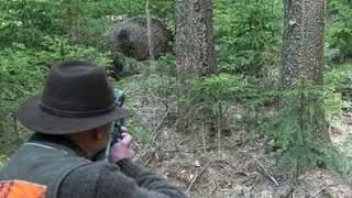 Top Best Shots of Wild Boar Hunting,Wildsau Jagd,Chasse Au Sanglier
