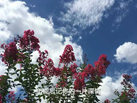 乡恋 by 麦禾