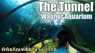 The Tunnel, Waghor Aquarium