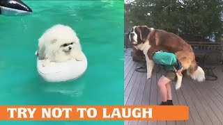 Try Not To Laugh At This Ultimate Funny Dog Video Compilation |funny dog hates middle finger