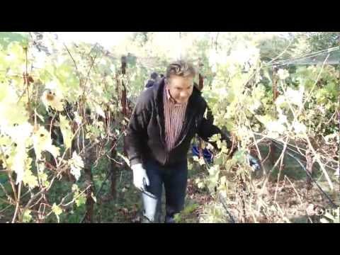 One Acre Wines Harvest 2011