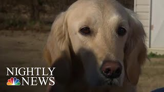 Service Dog Receives College Diploma Alongside Owner | NBC Nightly News
