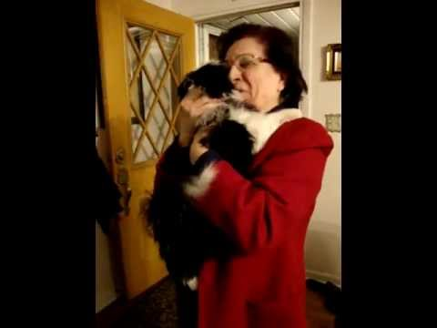 Grandma getting surprised with her new puppy:)