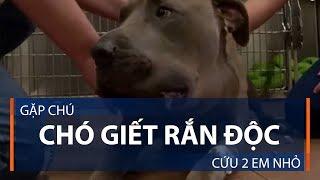 Gặp chú chó giết rắn độc cứu 2 em nhỏ | VTC1