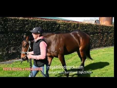Regal Bloodstock - Testa Rossa x Vogalago Filly