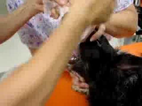 Inhalaciona anestezija psav