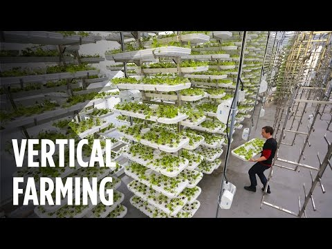 Vertical Farming: Could this be the future of food production?