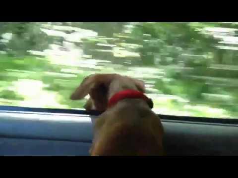Driving Miss Gretchen