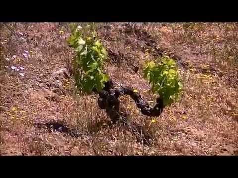 Priorat & Montsant Wine tour