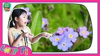 Flower Names in English for Kids Education Videos