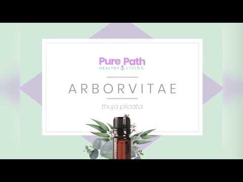 Arborvitae oil