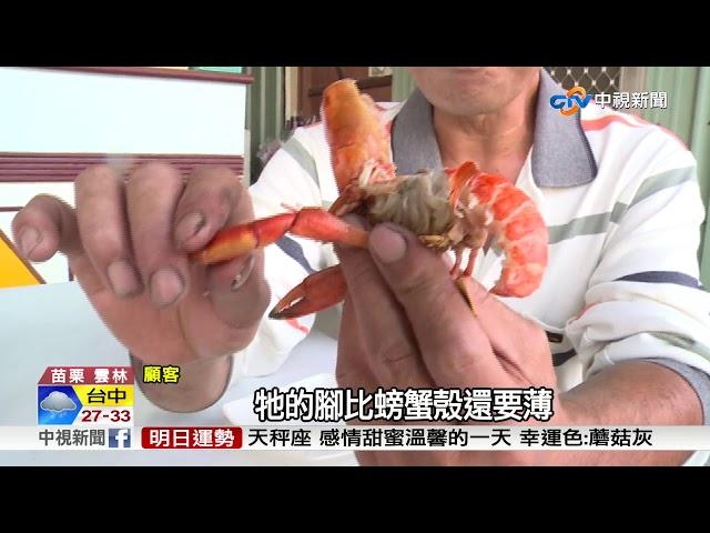 清蒸vs.辣炒 澳洲小龍蝦擠身美食第一線