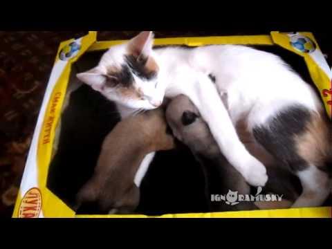 Czy kot może pokochać psa?