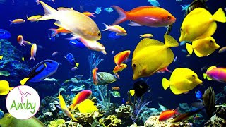🎧 Stunning Aquarium & The Best Relaxing Music -  SLEEP MUSIC - HD 1080P