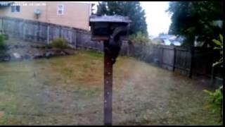 Squirrel ZAP!