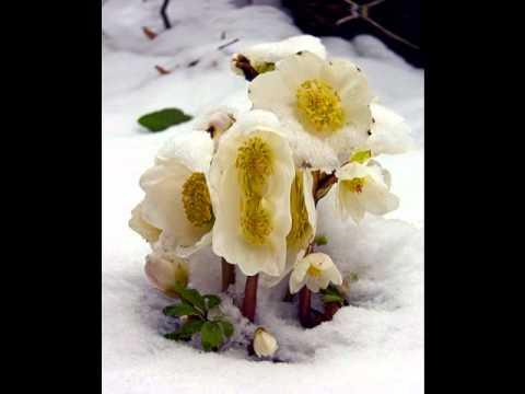 Eisblumen - Eisblumen (Unter dem Eis)