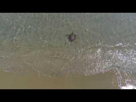 Solta de tortuges I Setmana d'Estudi i Conservació del Medi Ambient 2016
