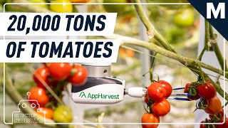 In the World's Biggest Greenhouse, Robots Are Picking Tomatoes from Towering Vines | Strictly Robots