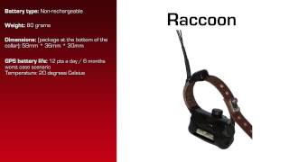 Watch video - GPS Collar for Raccoon