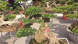 Bonsai đòi 180 triệu người mua trả bao nhiêu. Hơi buồn vì hiểu sai - bonsai market in My Dinh