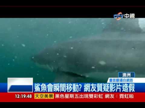 中天新聞》驚險! 男耍帥跳水 驚見鯊魚游過面前