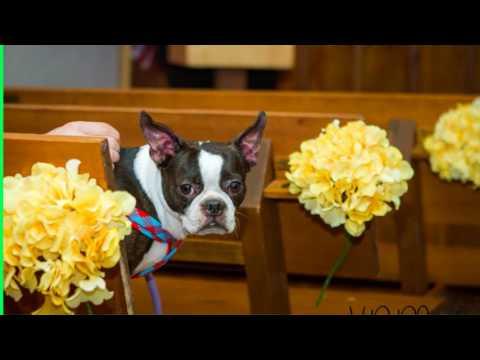 Wedding Chapel Phoenix