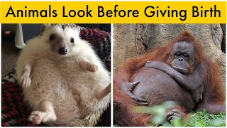 How 24 Animals Look Before Giving Birth