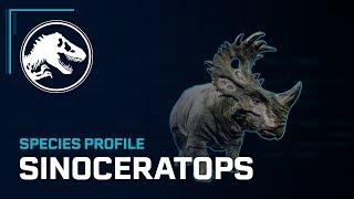 Species Profile - Sinoceratops