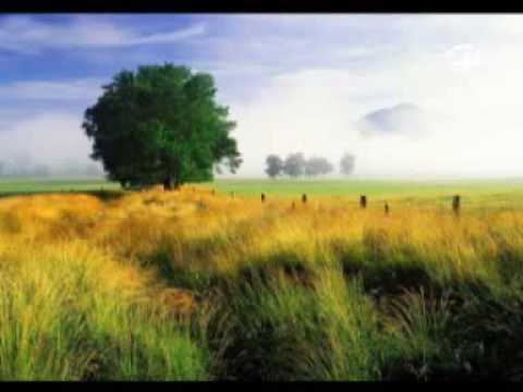 德德玛_美丽的草原我的家