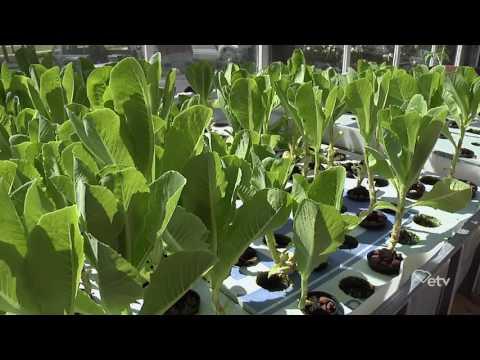 Making It Grow - Coker College Aquaponics