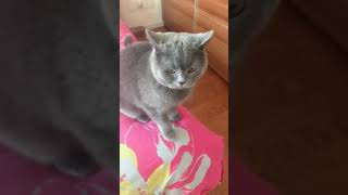 Cats are so funny you will die laughing 685