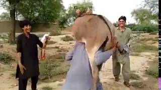 Power Of Pathan funny video