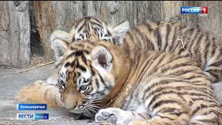 В Большереченском зоопарке прибавление cразу в двух семьях