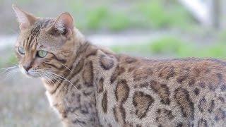California's Largest No-Kill Cat Sanctuary