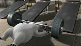 el oso bernardo - gym