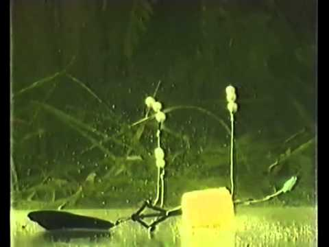 технопланктон со дна